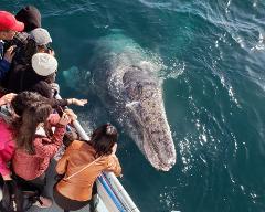 $16 Newport Beach Whale Watching & Dolphin Cruise