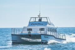 Luxury Whale Watching - Fewer People, Extra Speed, Expert Staff