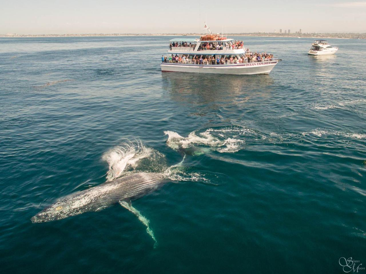 16 Whale Watching Dolphin Cruise