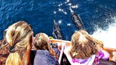 Captain's Seating Whale Watching & Dolphin Cruise