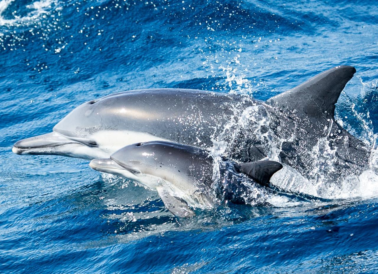 13 Whale Watching Dolphin Cruise