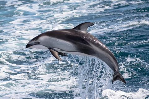$13.00 Whale Watching & Dolphin Cruise