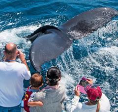 Newport Beach Whale Watching & Dolphin Cruise