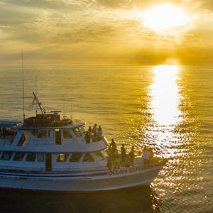 Sunset/Evening Cruises