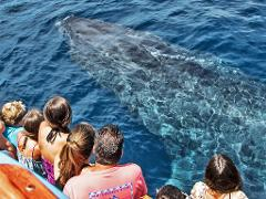 Whale Watching & Dolphin Cruise - Large Group