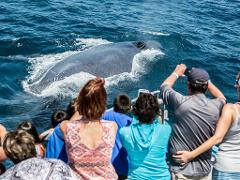 Private Rental - Whale Watch