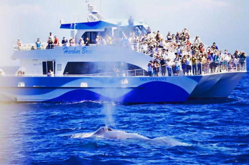 Whale Watching and Dolphin Tour