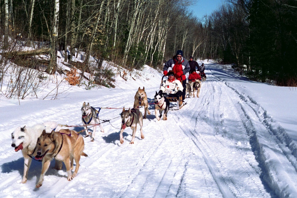 Dog Sledding Day Trips