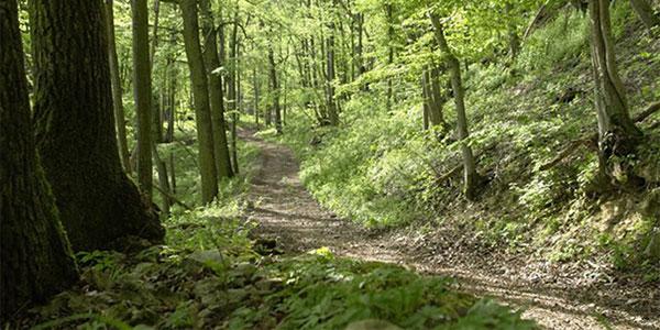 Hike Austin's Greenbelt - Daily