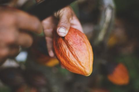 Arenal - Estukurú Chocolate Tour