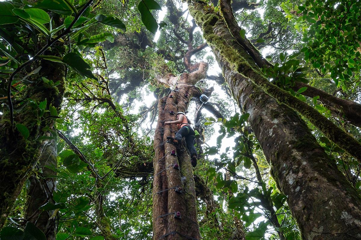 Monteverde - Arboreal Tree Climbing Park