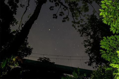 Monteverde - Night Tour Hanging Bridges Walk
