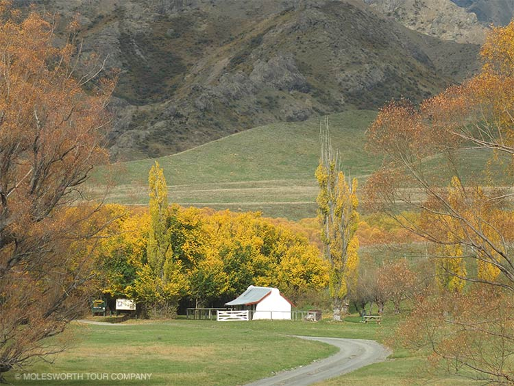 1 Day Molesworth Tour