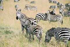 Panoramic Tanzania