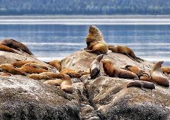 Sea Lions Island