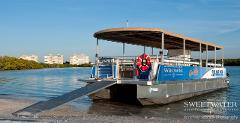 Dolphin/Sightseeing Tour 2.5 Hours