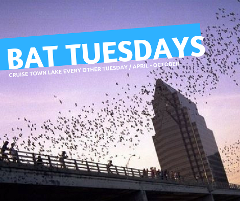 BAT TUESDAY