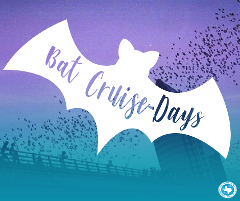 BAT CRUISE-DAYS
