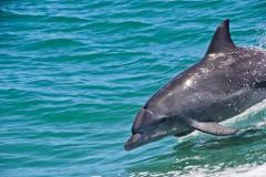 Dolphins, Penguins & Sea Lions Adventure and Swan River Cruise