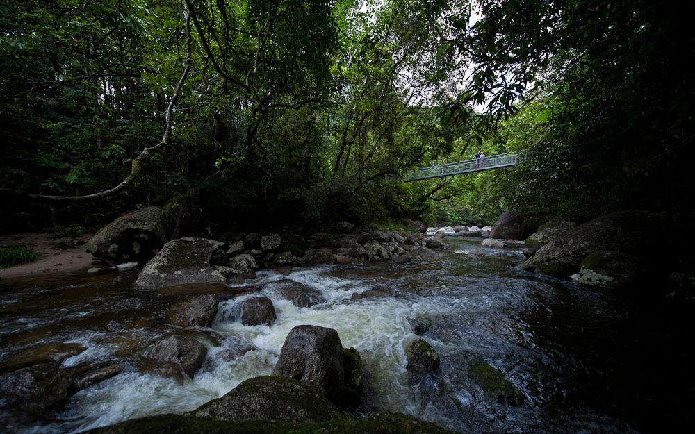 Transfer to Mossman Gorge from Port Douglas (Return)