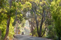 KI Dudley Peninsula Tour  - 3.5 hours (EX Penneshaw) - from $75