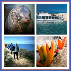 Coorong Adventure 6 Hour Cruise - EX Outer Harbor & Adelaide CBD