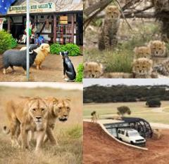 Monarto Zoo Experience and Adelaide Hills/Hahndorf Tour