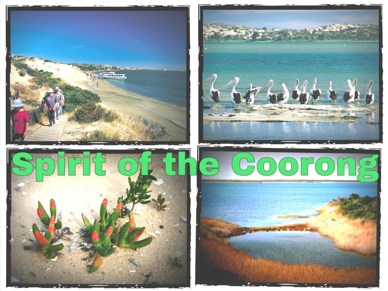Spirit of Coorong Discovery Cruise  (Storm Boy Country) & Fleurieu Peninsula Tour - EX Adelaide, Glenelg & Hahndorf