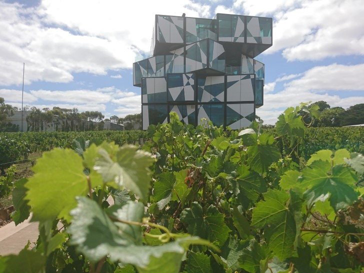 d'Arenberg Cube / McLaren Vale Tour