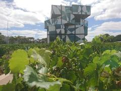 McLaren Vale / d'Arenberg Cube Tour (6 hrs)