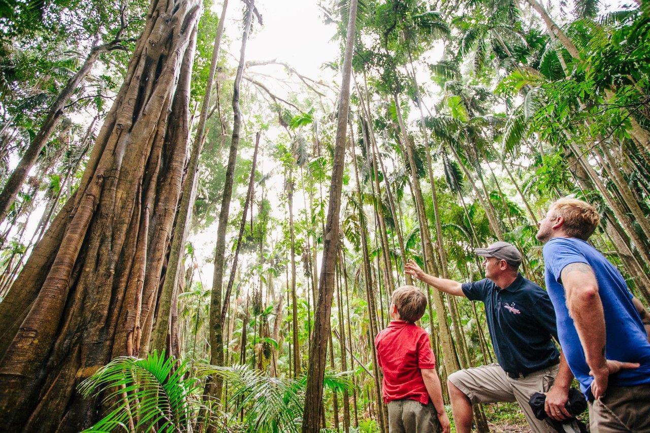 1-Day Rainforest and Wildlife Tour - Tamborine Lamington & O'Reilly's, Window To the Wilderness