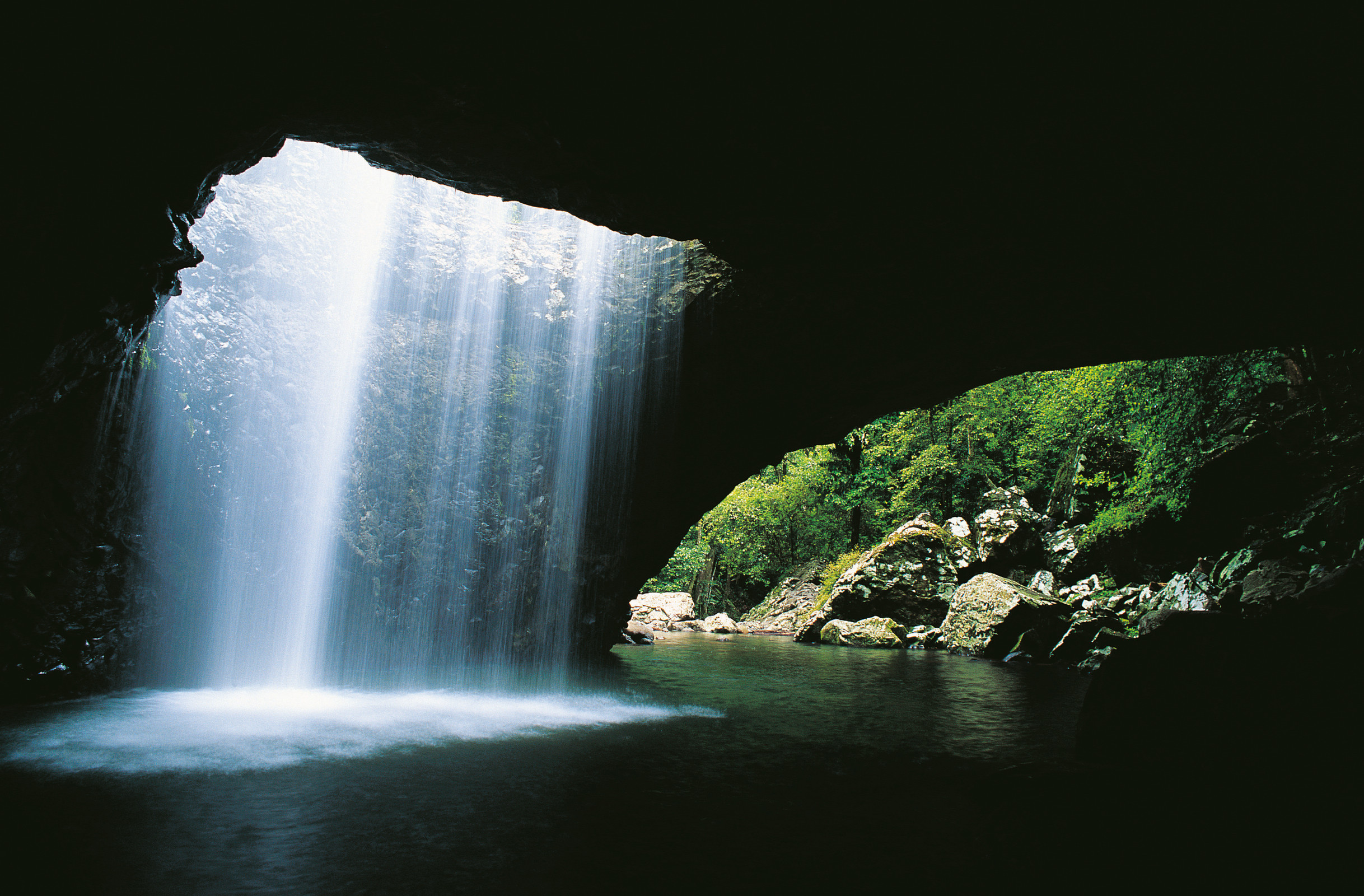 1-Day Natural Bridge and Springbrook Tour