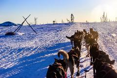 3 Hour Dog Sled Tour