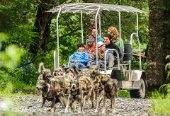Turning Heads Kennel Tour & Dog Sled Ride