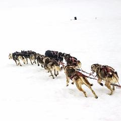 60 Minute Winter Dog Sled Tour