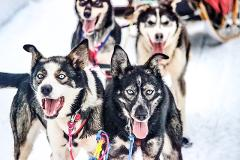 3 Days + 2 Nights Winter Dog Sled Tour, Willow, AK