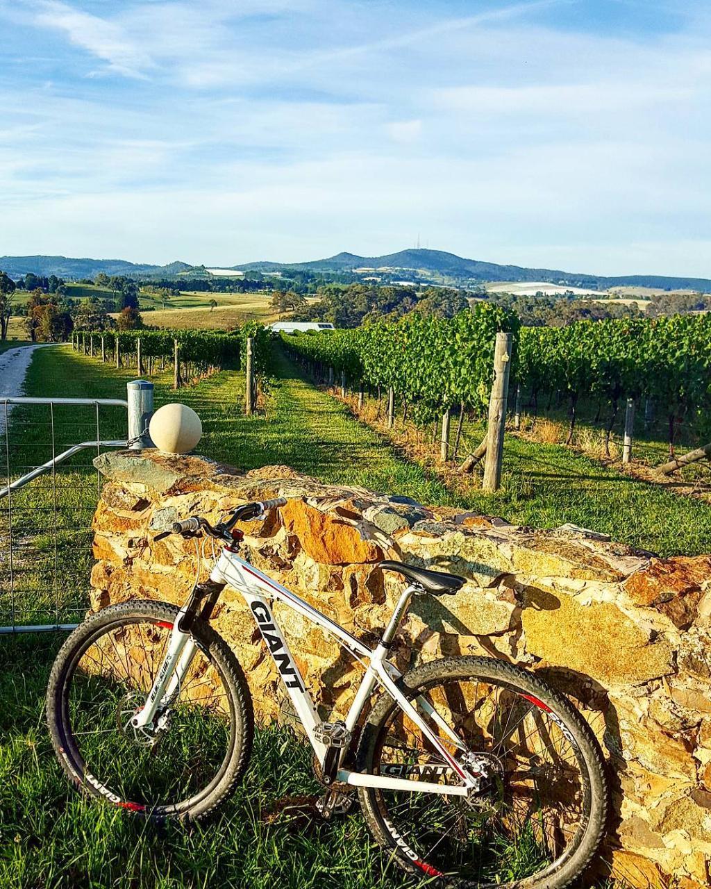 Orange Wine Tours Electric Bike Hire