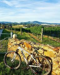 Orange Wine Tours Electric Bike Hire