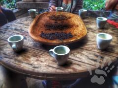 Coffee Tour + COMBO Mini Canyon