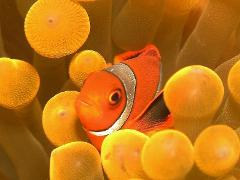 Atauro Island Dive Safari