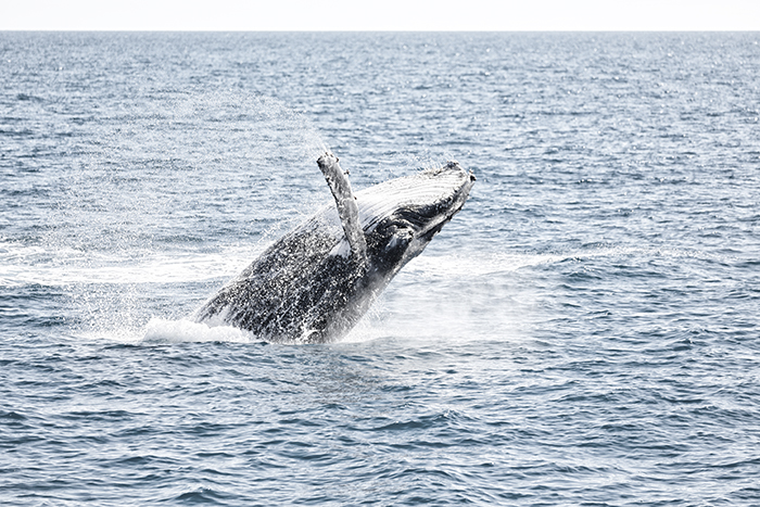 Flight 12 - Whale Watching Flight (Private flight) 60 Minutes