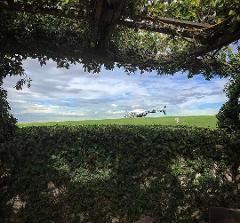 Flight 19b - Hunter Valley Helitour (7 Hours)