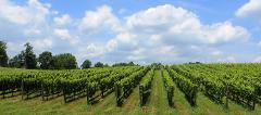 Annapolis Wine Tour