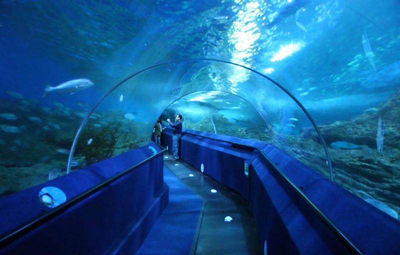 Image result for Aquarium of Western Australia (AQWA), Hillarys, Western Australia