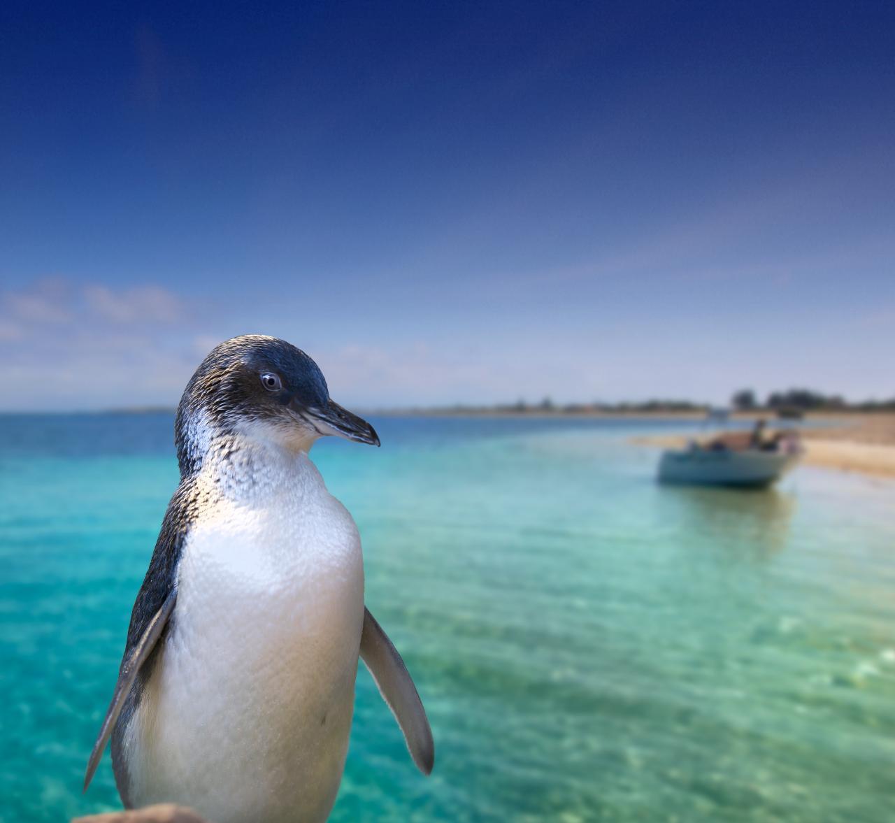 Explore Penguin Island, Wildlife Cruise & Caversham Wildlife Park