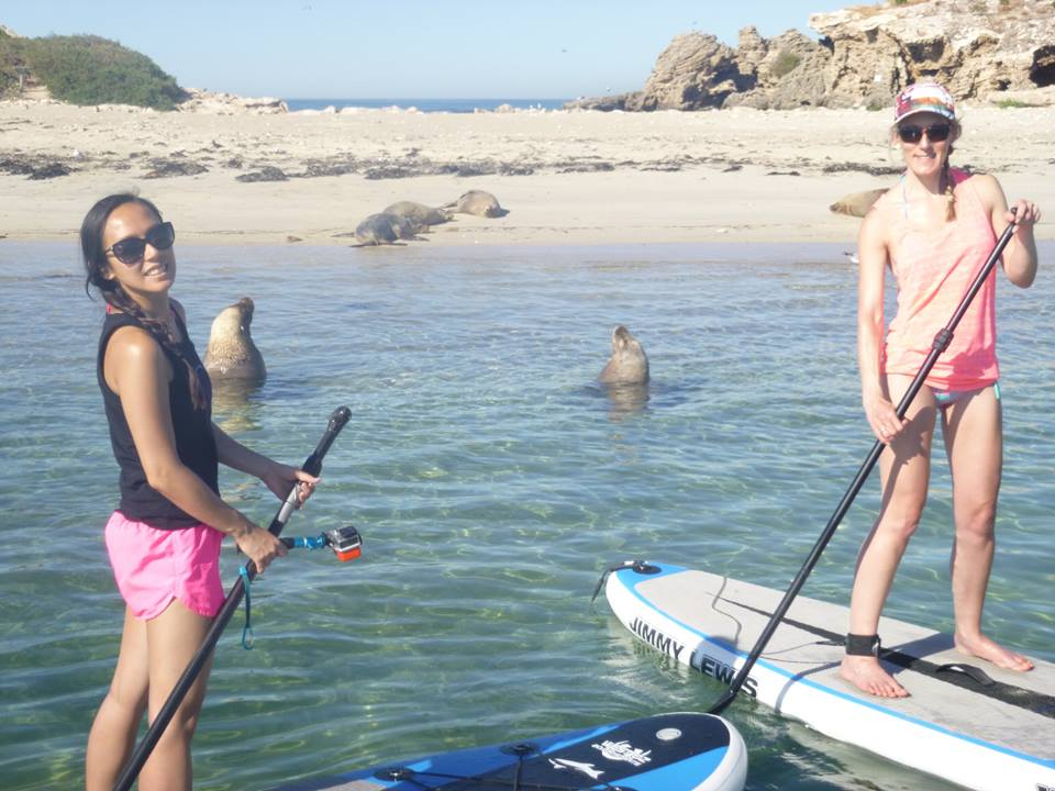 Stand Up Paddle Board and Seal Spotting Adventure  - 2 for 1