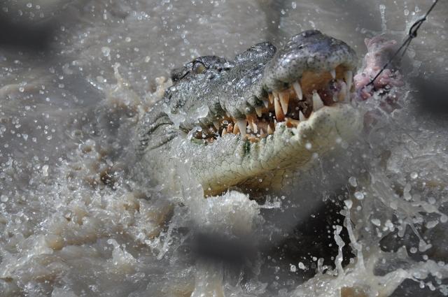 Cruise Ship Jumping Crocodile Express