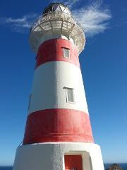 Cape Palliser Coastal Explorer Tour (not a bike tour!)