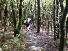 Tararua Experience