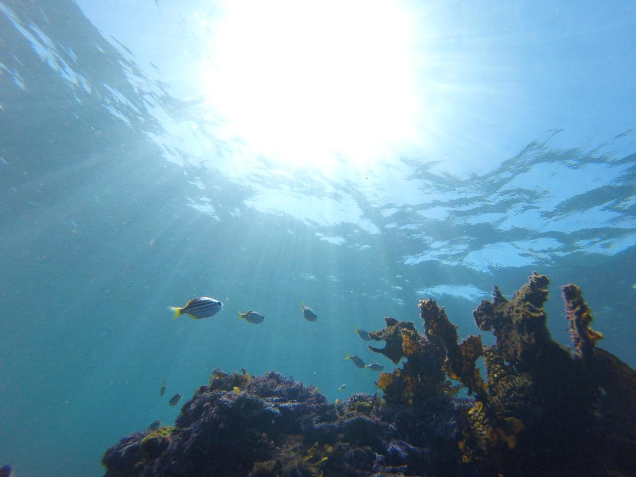 Non swimmer Adventure Eco Tour Sydney  5KM/H